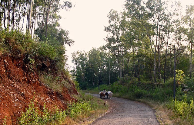 quiet country hill-side with bullock cart