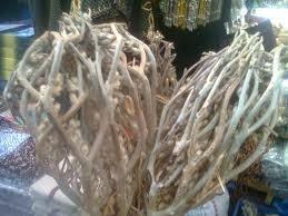 Bahaya Dan Manfaat Rumput Fatimah Dalam Persalinan