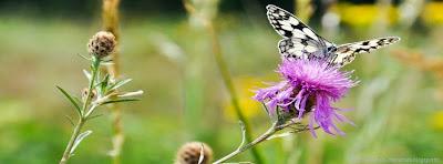Couverture facebook papillon
