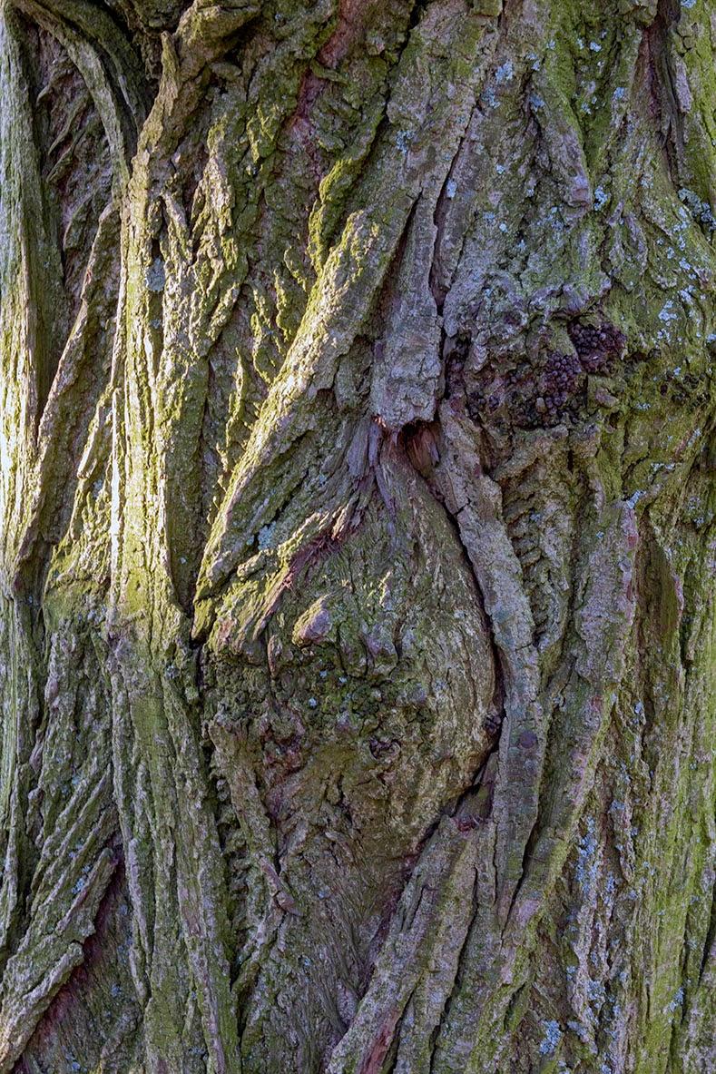 light on tree bark