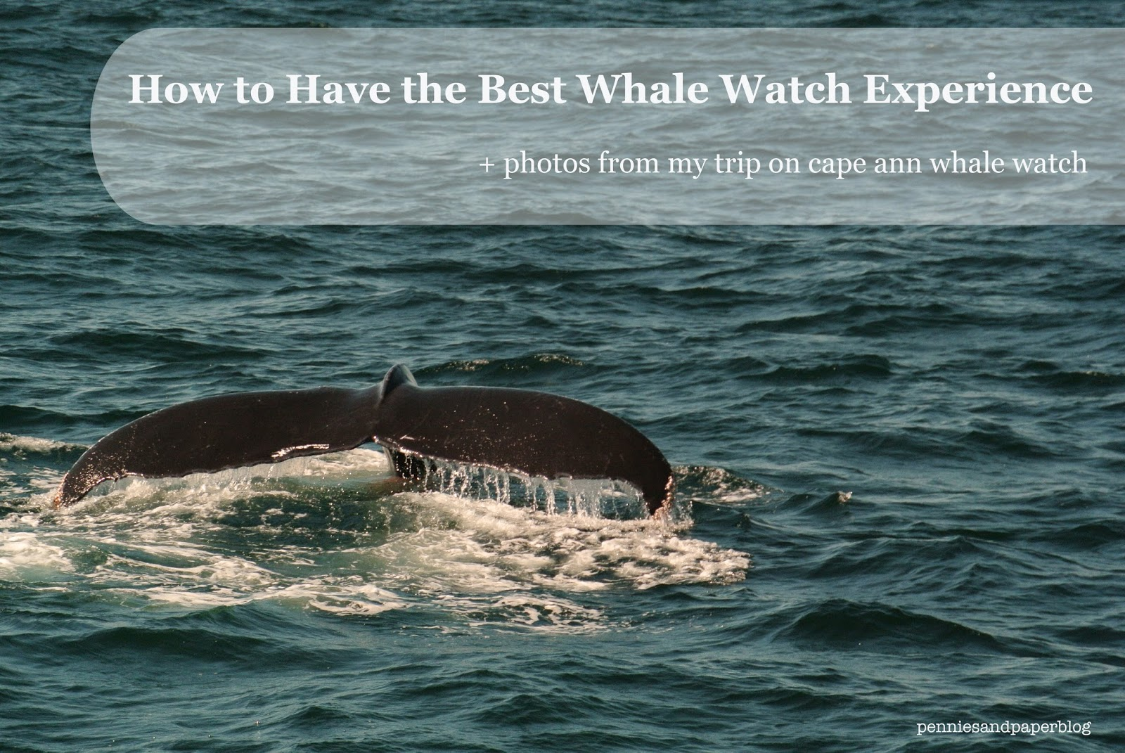 5 Tips for the Best Whale Watch Experience | Pennies & Paper Blog