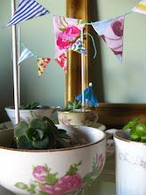 Mini jardincitos de suculentas