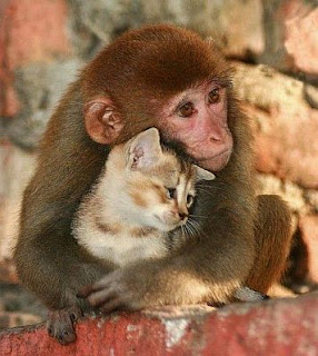 Fotos Tiernas de Animales, parte 1