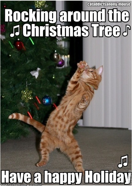 Funny Christmas Cat Meme : The eco cat lady speaks december