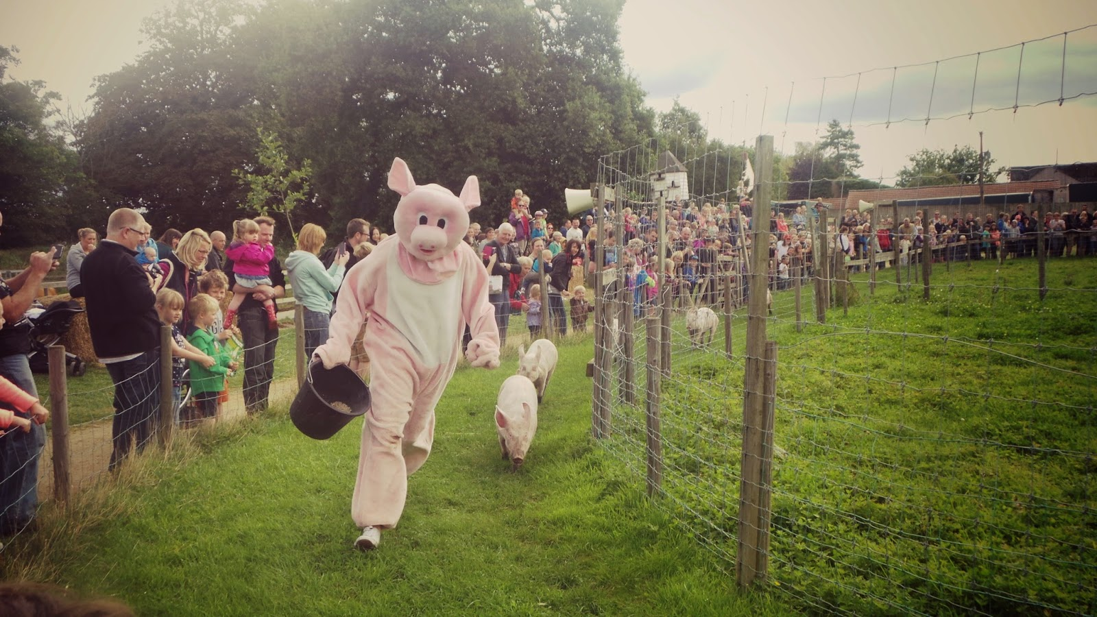 yorkshire pig racing
