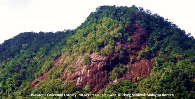 Wallace's collection locality: Mt Serambu Siniawan Kuching Sarawak Malaysia Borneo