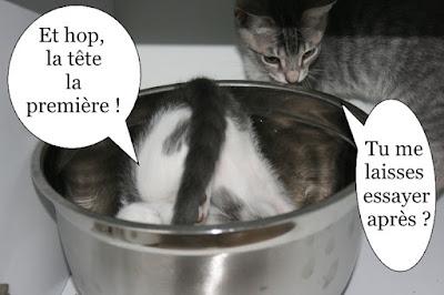 deux chatons jouent dans un bol dans un placard
