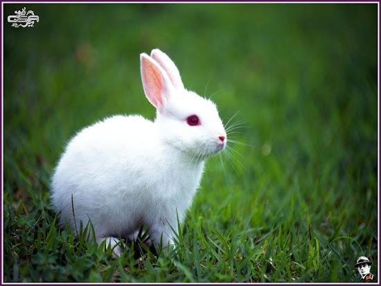Que significa soñar con conejo
