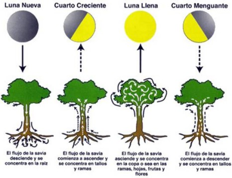 La influencia de los plenilunios for En que luna estamos
