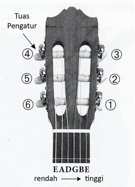 skema senar gitar