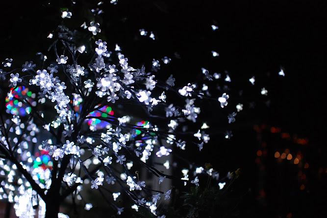 Sydney Christmas Lights Display 2012 Ashbury