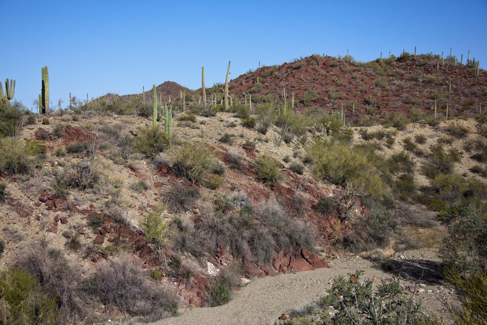 Marty Kittrell Tucson Arizona Arizona Sonora Desert Museum