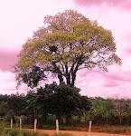Bahia - Terra de Todos os Santos