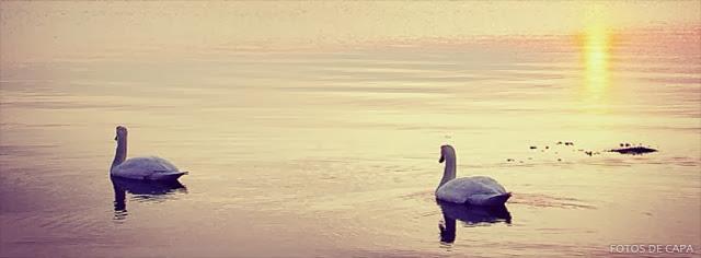 Casal de Cisnes