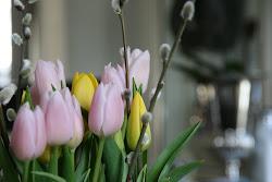 Tulipansesong