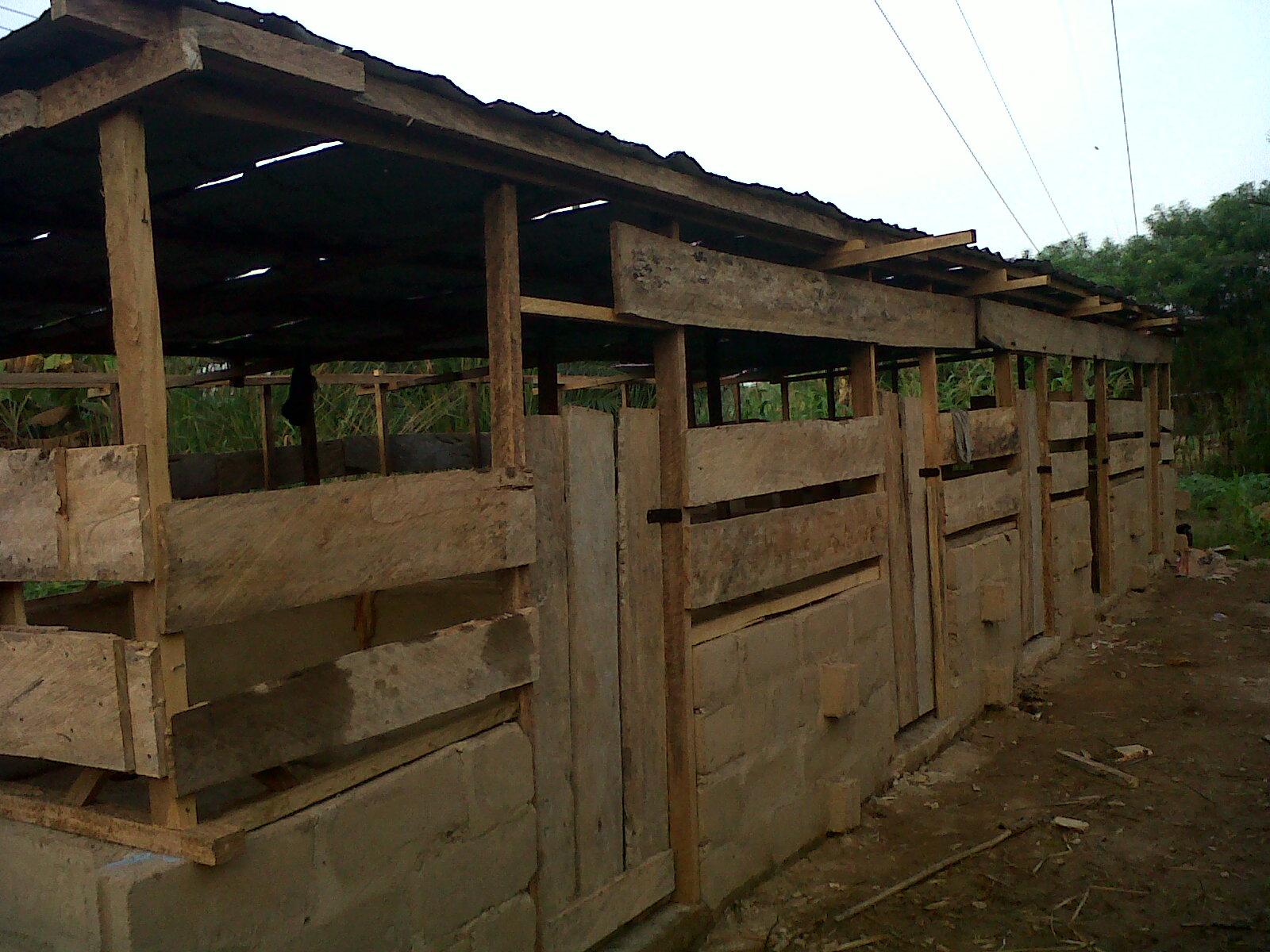 One Year of Pig Farming   Pig Farming in Ghana