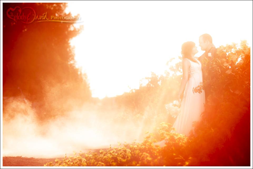 Harmony Wynelands wedding photography