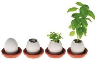 Floreros con Cascaras de Huevo, Ideas Bonitas y Ecologicas para Decorar
