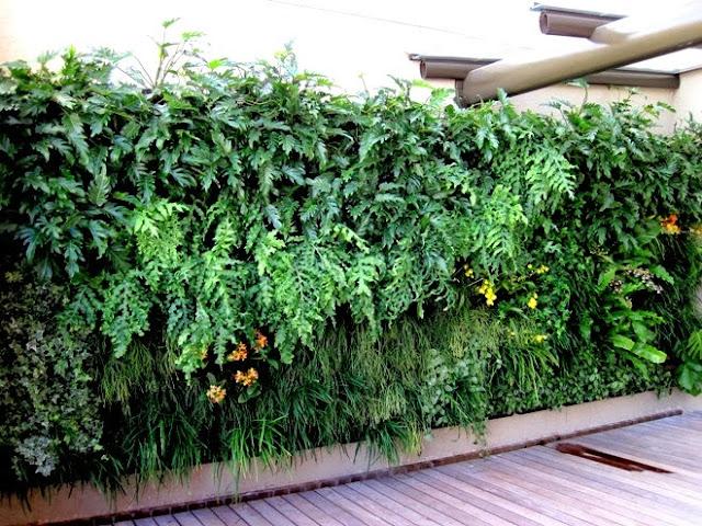 jardim vertical xaxim:Jardim vertical
