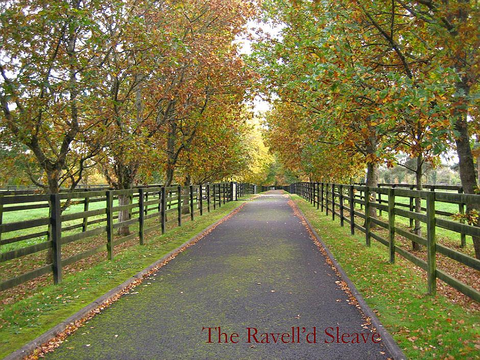 The Ravell'd Sleave