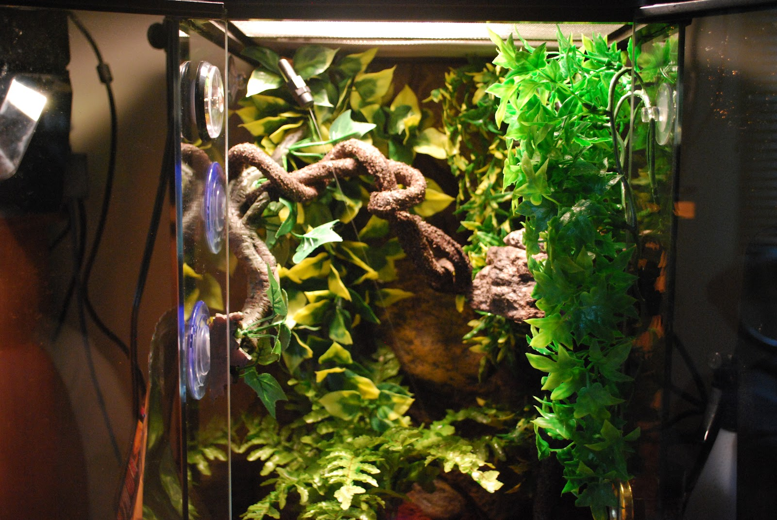 how to make a background gecko habitat