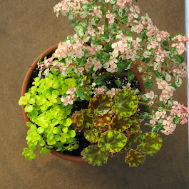 Top Selling 'Mini' Plants