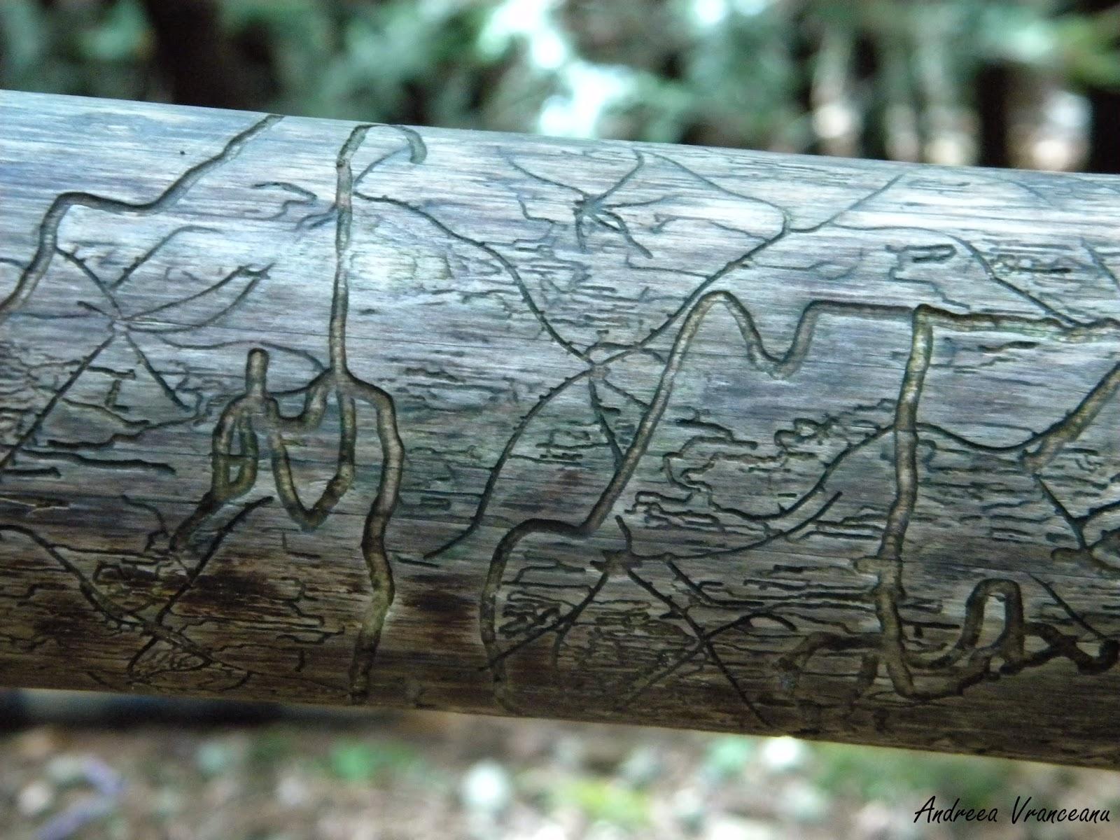carii, urme, pădure