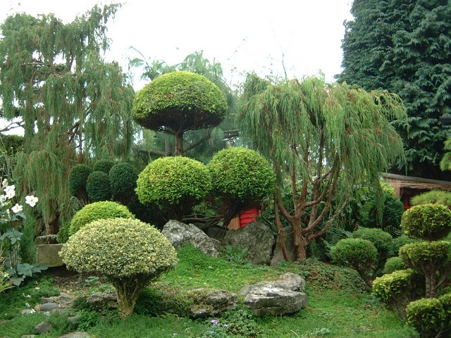 All about property small japanese garden concept for Small japanese gardens pictures