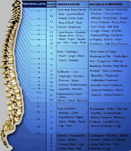 vertebral subluxation essay