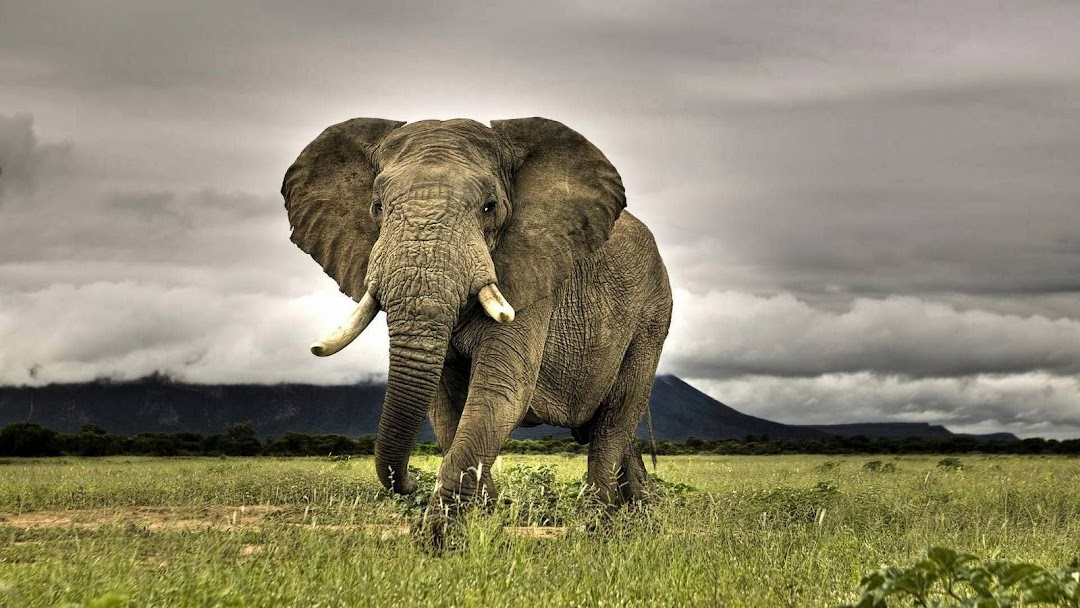 Elephant HD Wallpaper 3