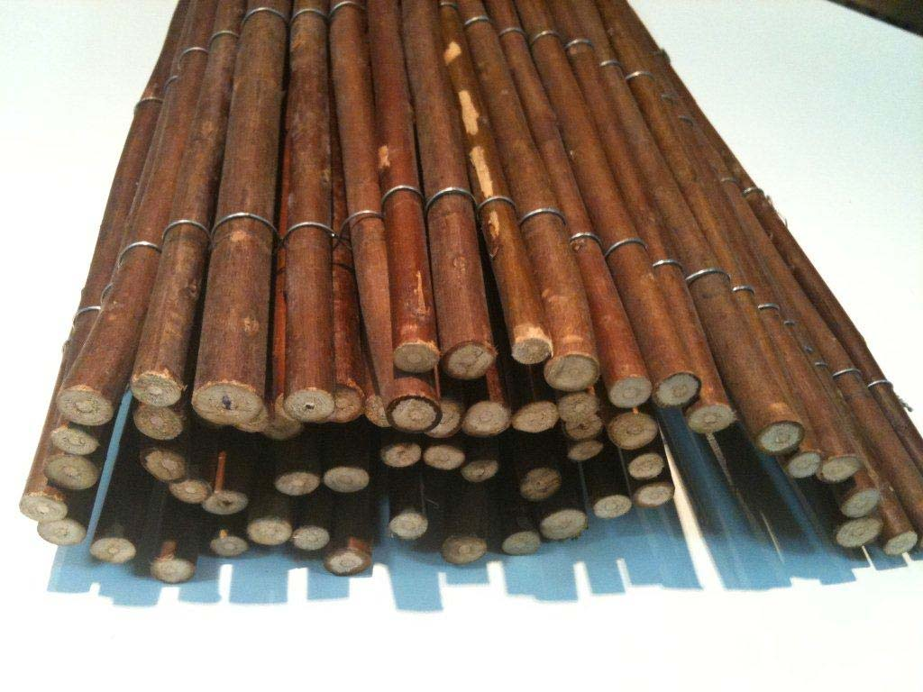 גדר במבוק ערבה בהולי אינטרנציונל