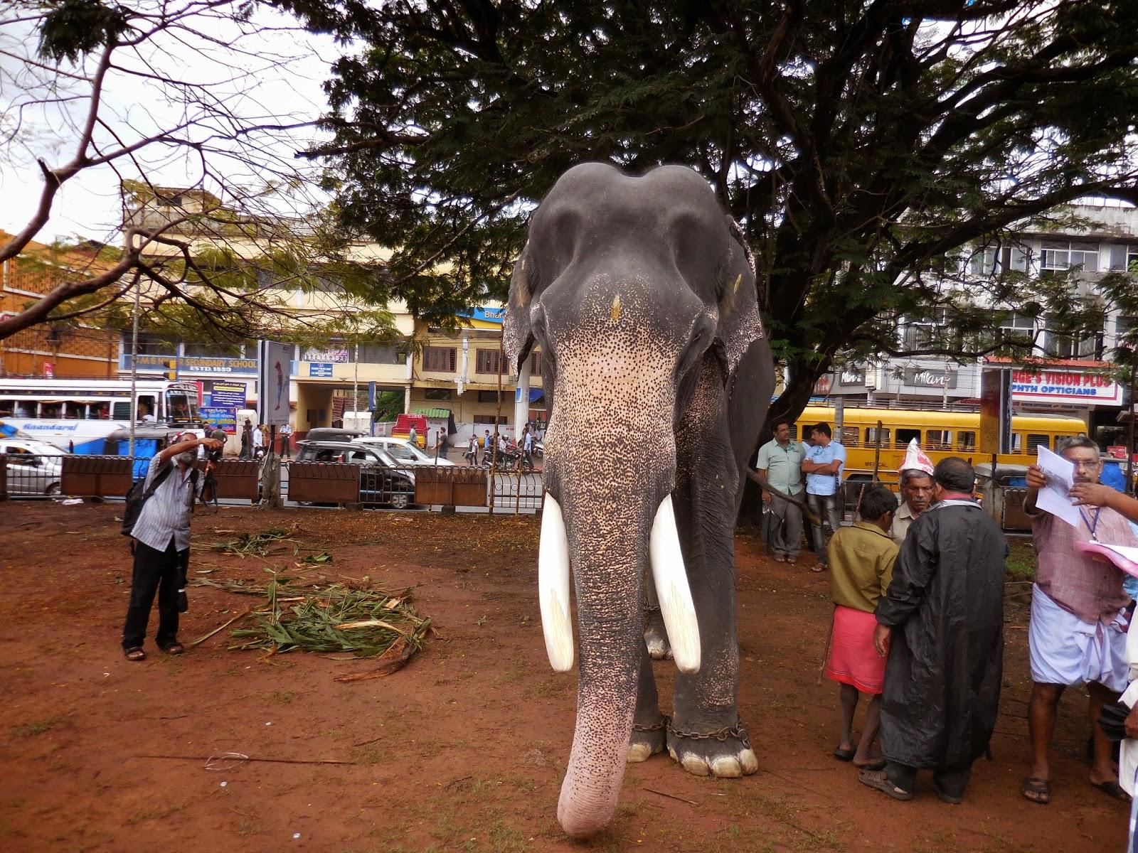 Thrissur India  city photos gallery : Thrissur Pooram, Kerala, India