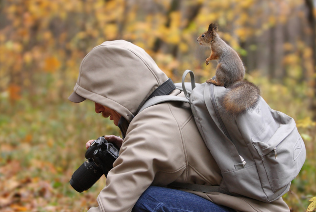 Perfectly timed animal shots