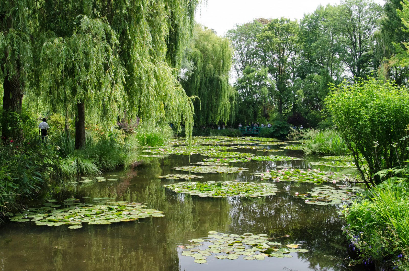 Giverny - maison de Monet - nympheas