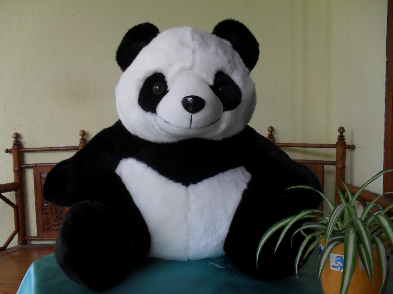 gambar boneka panda