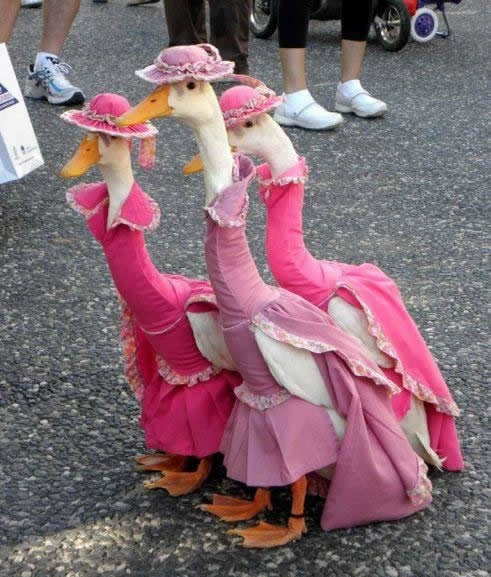 duck's fashion show