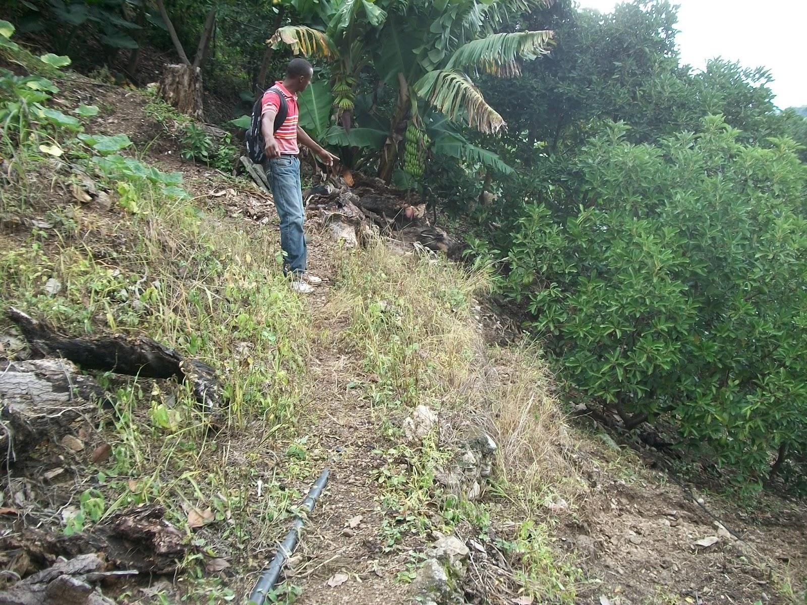 san jose de ocoa single jewish girls Haiti - dr : 930 haitians arrested in 24 hours in the  (189 men and 21 women)  la romana, la vega, maría trinidad sánchez, puerto plata, san josé de ocoa,.