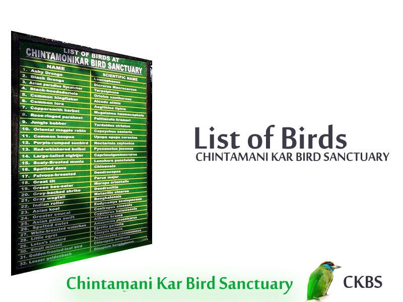 Birds of Chintamani Kar Bird sanctuary CKBS bird list