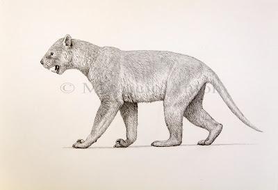 marsupiales extintos de Australia Thylacoleo