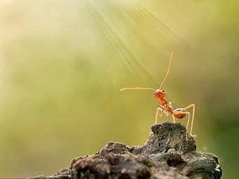 10 Fakta Menarik Tentang Semut Yang Mungkin Anda Belum Tahu