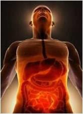 El Sistema Nervioso Entérico o Cerebro Abdominal y la Kinesiología Psiconeuroenergética