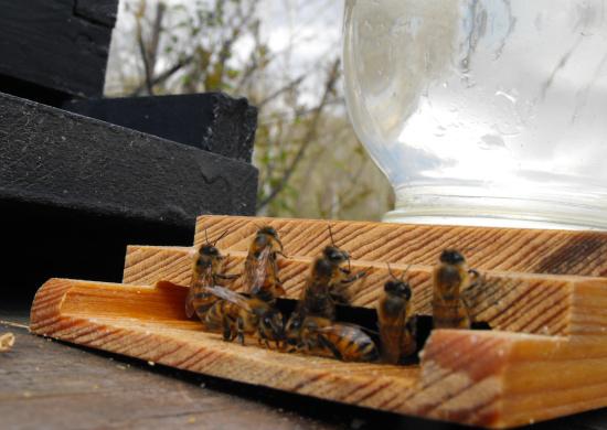 Внутриульевые поилки для пчел 28