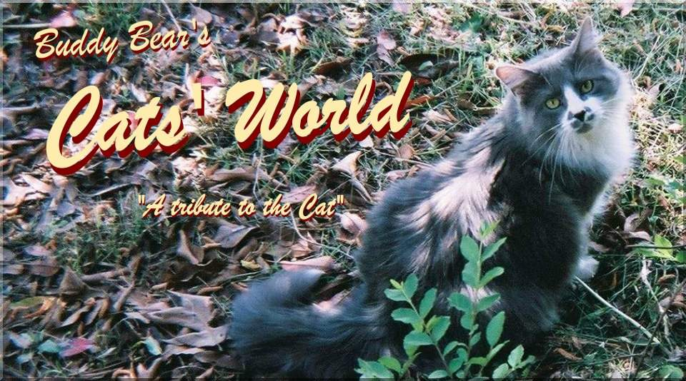 Buddy Bear's Cats' World