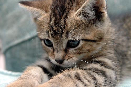 motivational kitten posters