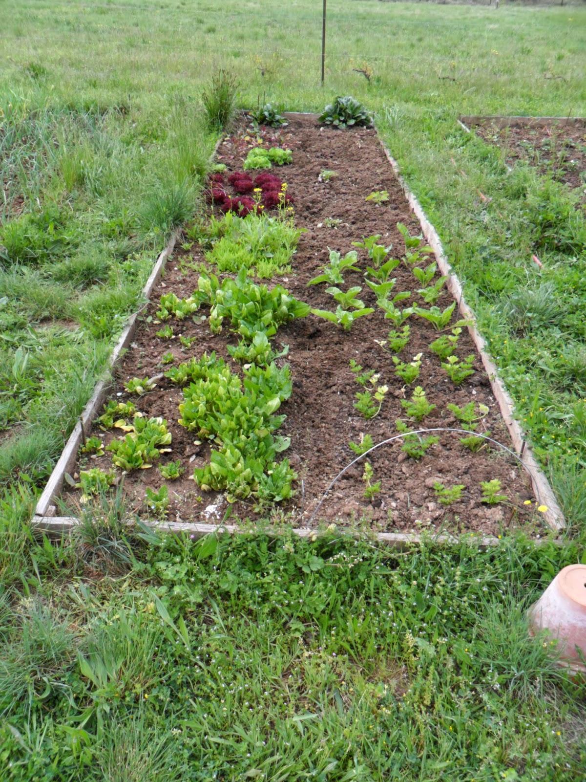 Le jardin de prosper les news au potager - Combien de sorte de tomate ...