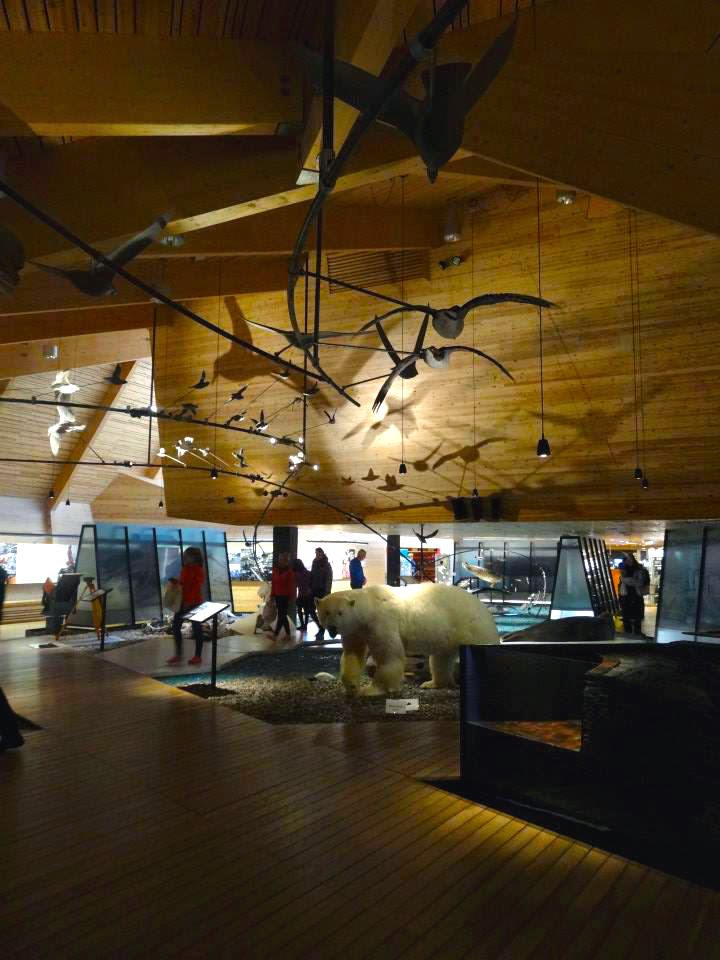 Svalbard Museum, polarbear, birds, taxidermy