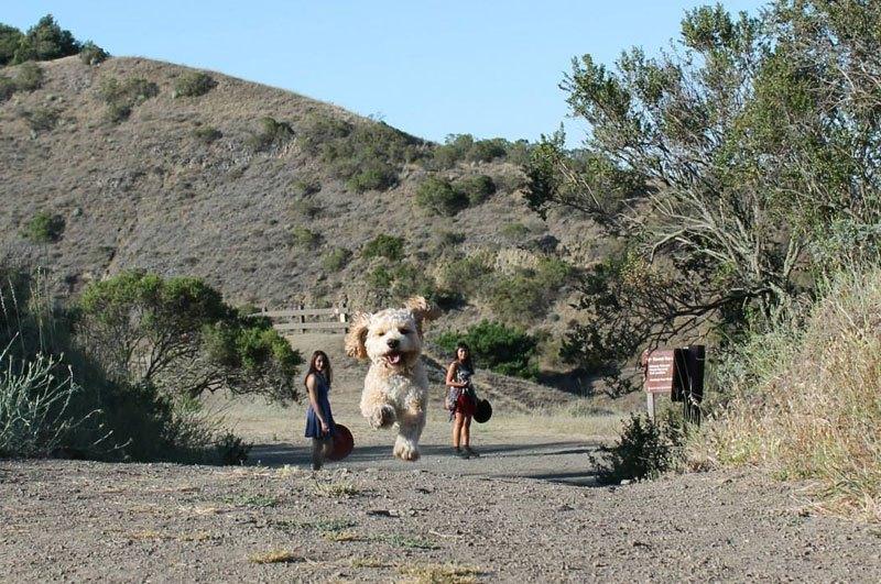 Imagen del día: Perspectiva forzada o el perro más grande del mundo?