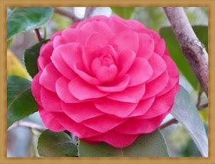 Nuestra flor