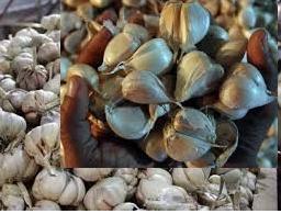 khasiat dan manfaat bawang putih