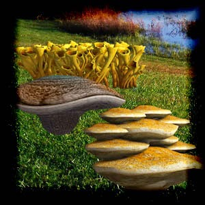 http://2.bp.blogspot.com/-pjkse--8GwI/U3w6vSztV6I/AAAAAAAACu4/jufxD5_0gb8/s1600/Mgtcs__Fungis_2014.jpg